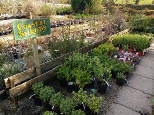Deelish Garden Centre -- New Website, New Shopping Experience