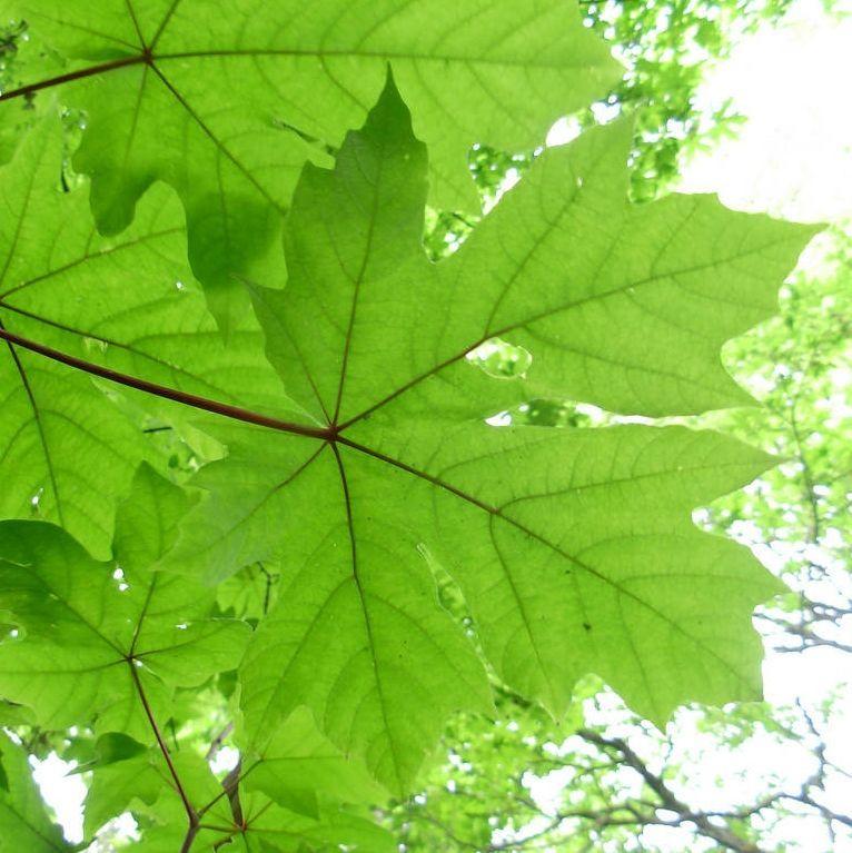 Bareroot Trees & Hedging 2017-18