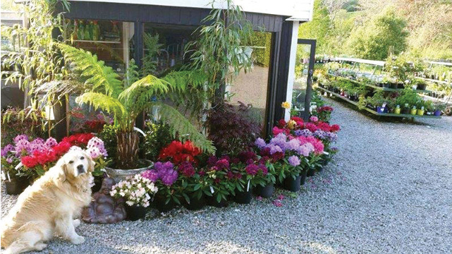 Garden Centre: Deelish Garden Centre Ireland, Rare Plants And Sustainable