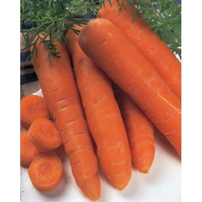 Carrot, Autumn King 15g pkt