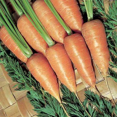 Carrot, Chantenay