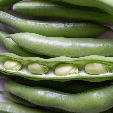 Beans - Broad Beans 'Aquadulce Claudia'