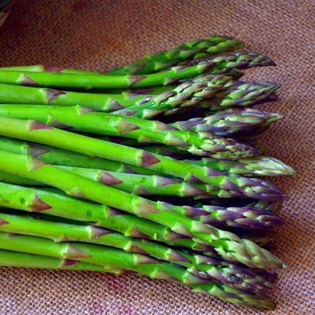 Asparagus, Connover's Colossal