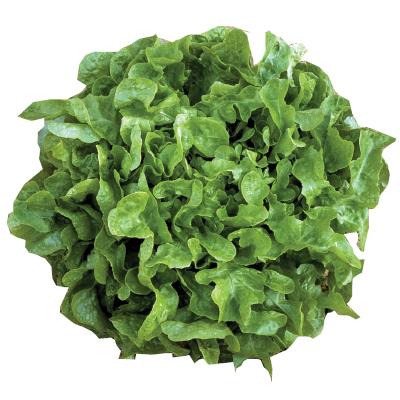Lettuce Veredes