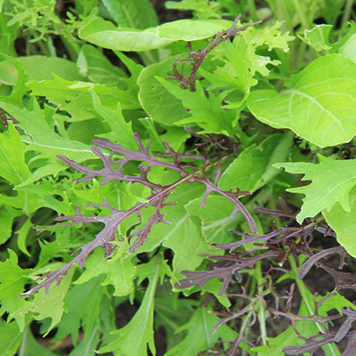 Asian Leaves Salad Mix