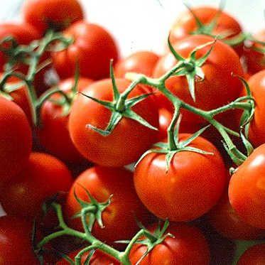 Tomato, Ailsa Craig