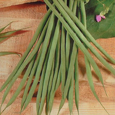 Beans - Dwarf French 'Aguillon'