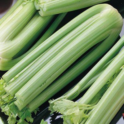 Celery, Green Utah